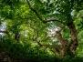 Природозащитена местност Буйна
