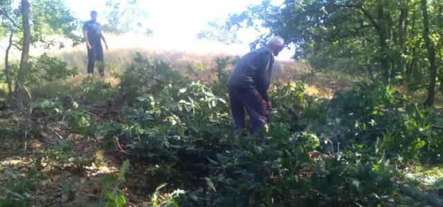 Почистиха от дървета и храсти 50 км по границата с Македония